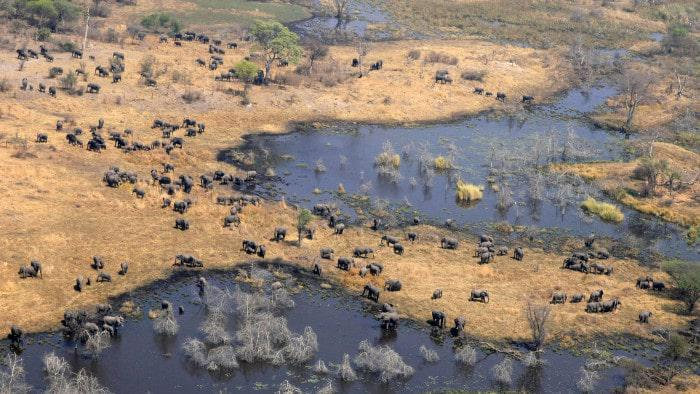 chobe national park teeming with largest concentration of elephants