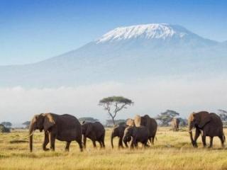kenya amboseli national park with kilimanjaro in background