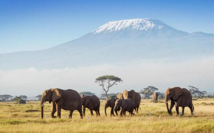kenya amboseli national park with kilimanjaro in background
