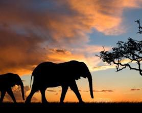 elephants-against-african-sky