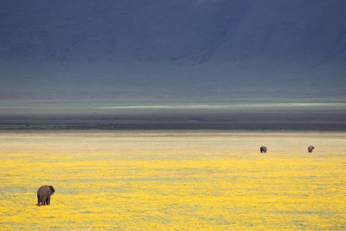 ngorongoro-crater-banner1