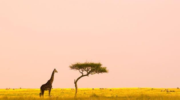 Best Time To Visit Kenya: Advice From the Safari Experts