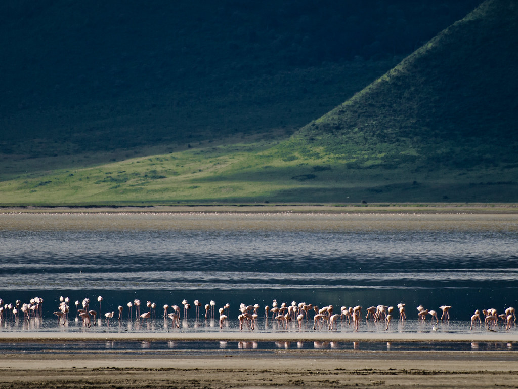 Flamingoes against a backdrop of the vegetation covered ridges at the edge of the Ngorongoro Crater, Tanzania