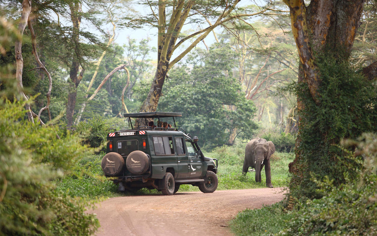 Game drive encounter with an elephant in the Ngorongoro Crater, Tanzania