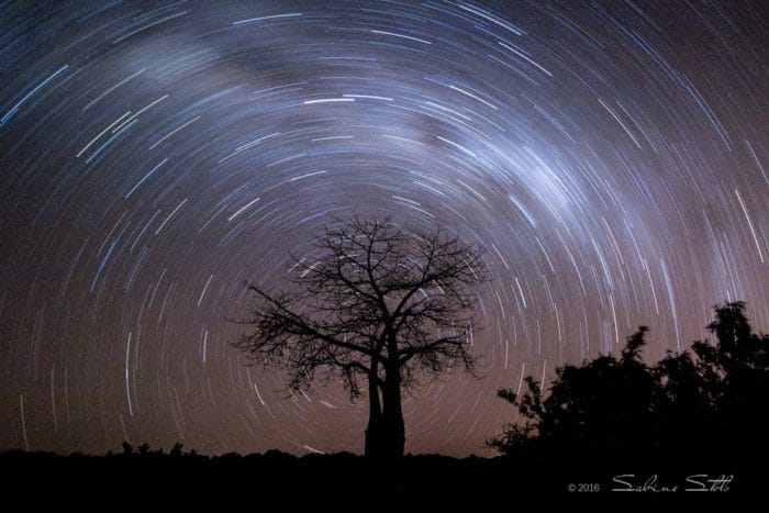 Baobab_Star Trail-Photo Credit Sabine Stols