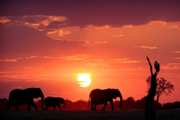 Elephants sunset Photo Credit Sabine Stols