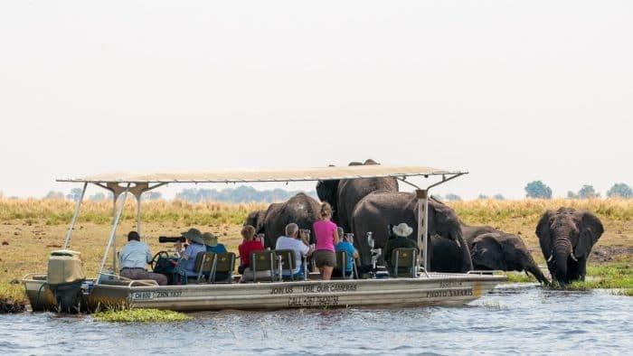 Pangolin Chobe River