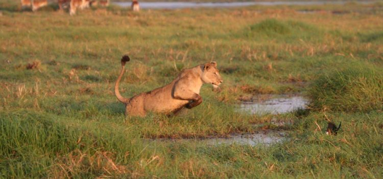 Busanga Plains – Zambia's best kept secret