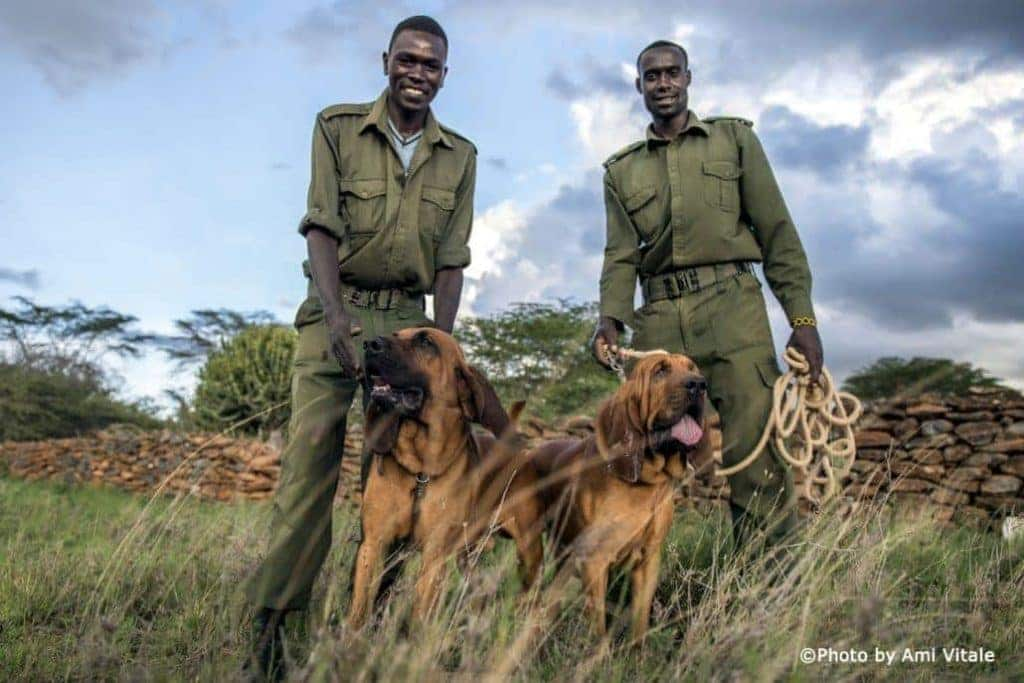 Loisaba's very own 'Bloodhound Gang' - with Warrior and Machine sniffing --- and snuffing out trouble!
