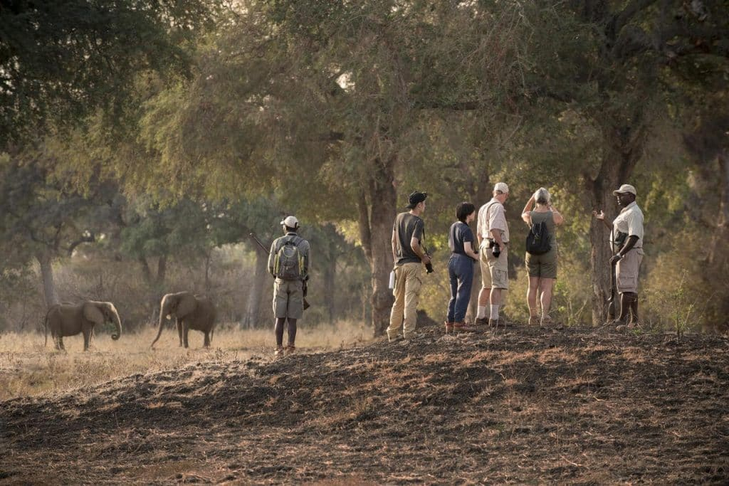 Set out on foot with your guide and tracker into the bush for an intimately immersive wildlife experience.