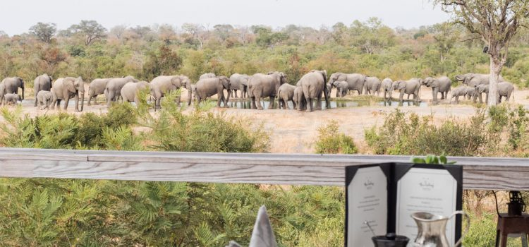 Simbambili Game Lodge - watering hole - elephants