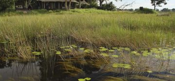Update on water levels in the Okavango Delta