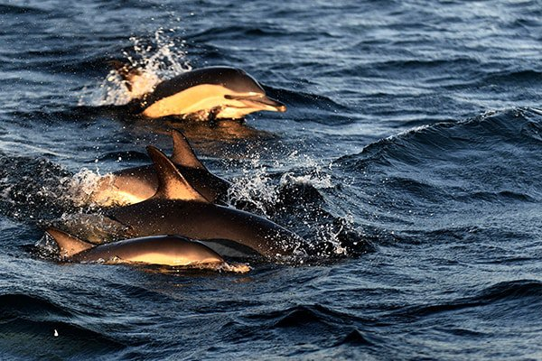 Dolphins and seals delighting kayakers off the coast of Cape Town