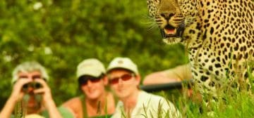 Family Safari Fun – Mala Mala to the Kalahari