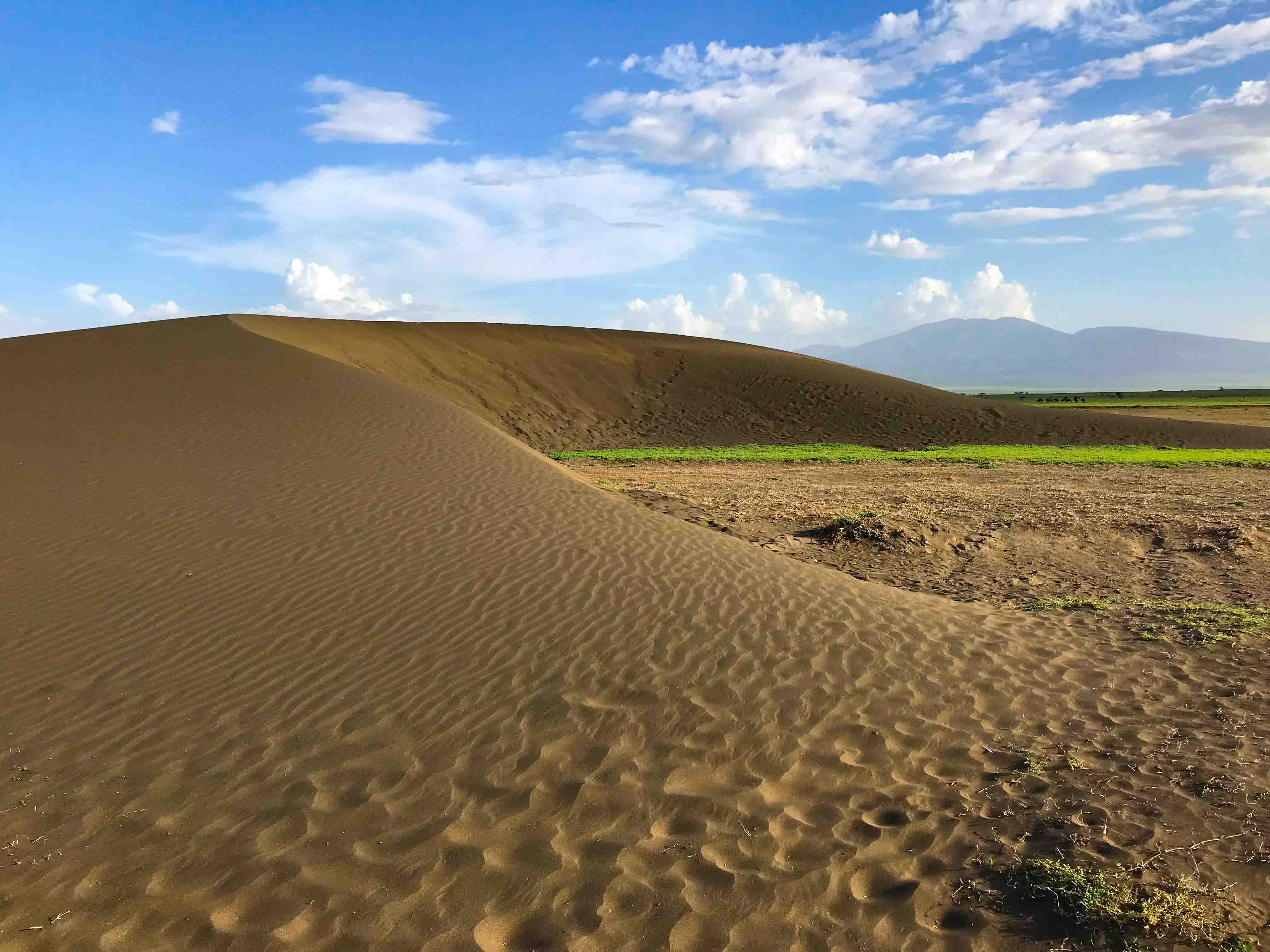 'Shifting Sands' Dune - Ngorongoro Conservation Area Authority