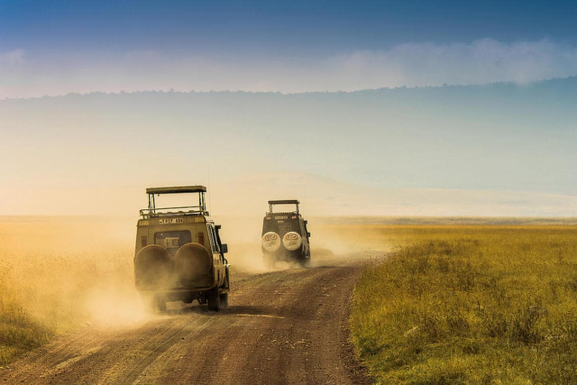 Game drives within the Ngorongoro Crater aim to minimize the disruption of the abundant wildlife