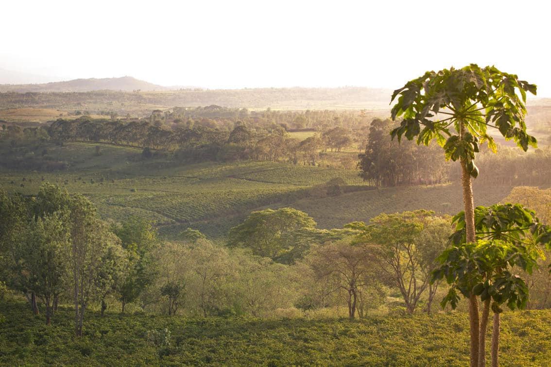 View from Gibb's Farm in Tanzania