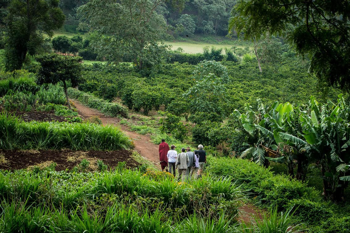Visit one of the many coffee plantations in the Ngorongoro Crater area, like Gibb's Farm
