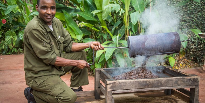 From plantation to freshly brewed coffee: coffee plantation visit at Gibb's Farm