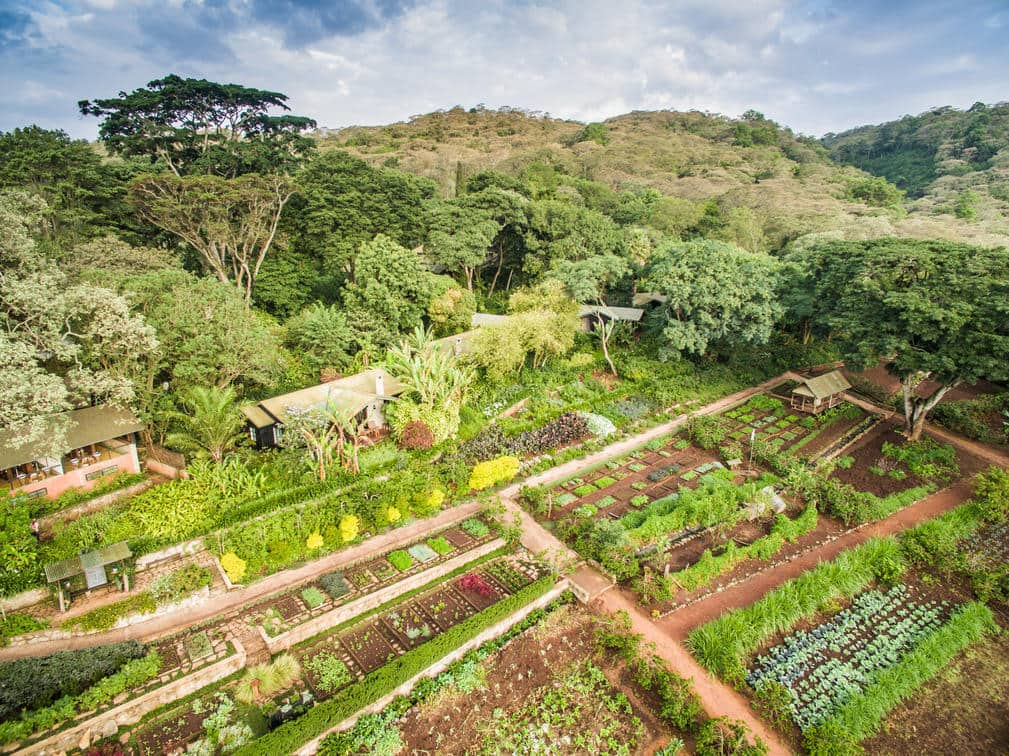 Beautifully terraced fruit, vegetable and herb garden at Gibb's Farm in Tanzania