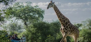 The Best of Kruger, Vic Falls and Okavango
