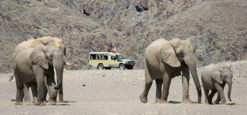 Safari Extremes – Namibia & Botswana