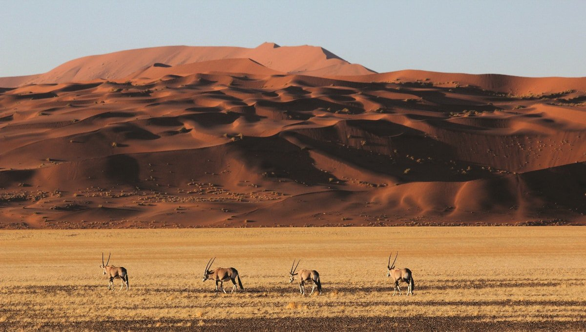 Oryx in front of giant red dunes in Namibia