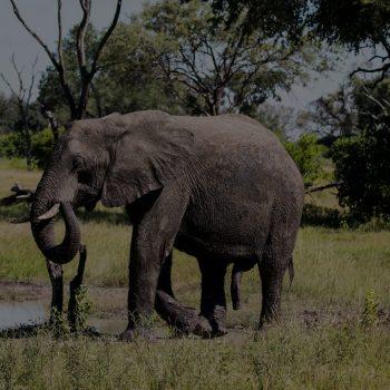 THE ELEPHANT SAFARI WAS A THRILL!
