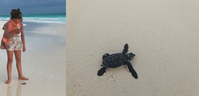 Ruby on the beach watching carefully over a little turtle hatchling as it makes its way to the ocean over the beach