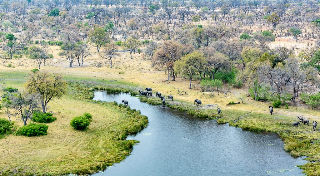 Helicopter view of elephants on the shores at Kwando Lagoon Camp in Botswana