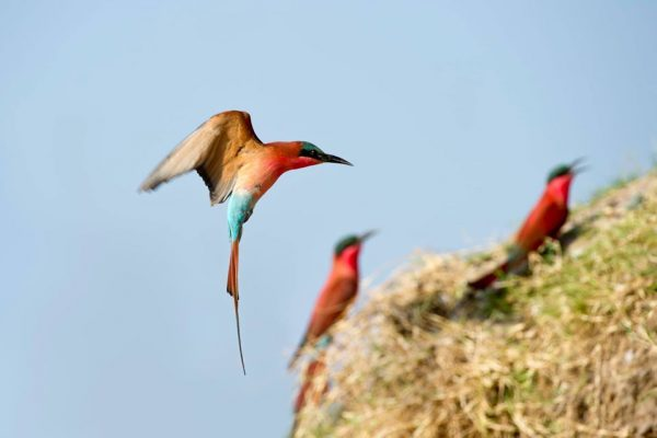 A Safari For Purists - birding - Mfuwe Lodge - Zambia - Southern Destinations