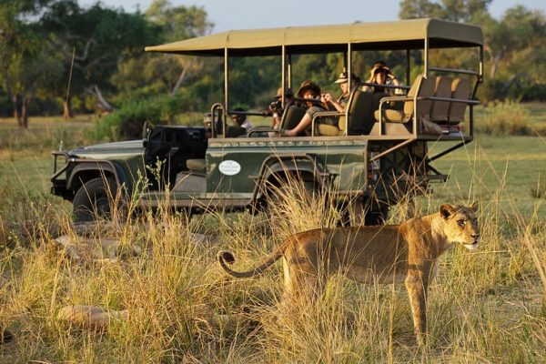 A Safari For Purists - lioness on game drive - Chindeni Bush Camp - Zambia - Southern Destinations