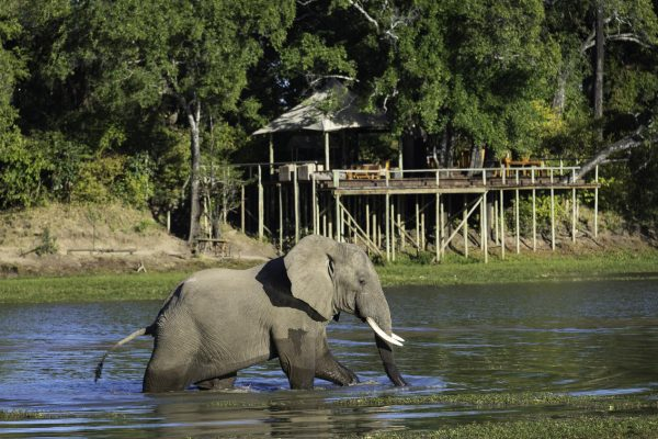 A Safari For Purists - elephant in river - Chindeni Bush Camp - Zambia - Southern Destinations