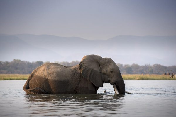 A Safari For Purists - canoeing with elephants - African Bush Camps Zambezi Expeditions - Zambia - Southern Destinations