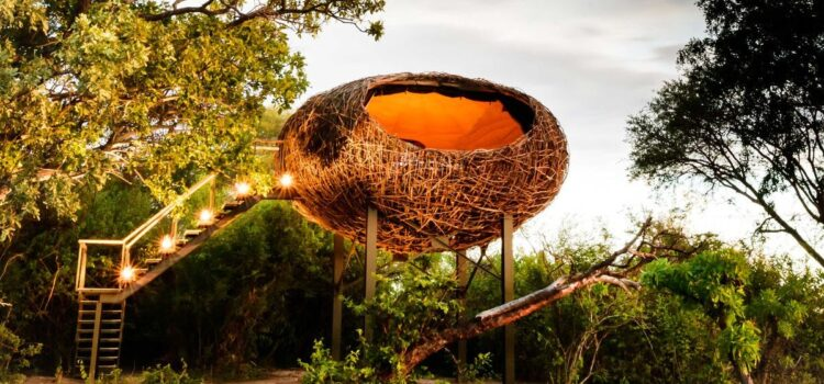Starbeds, treehouses and sleepouts on safari